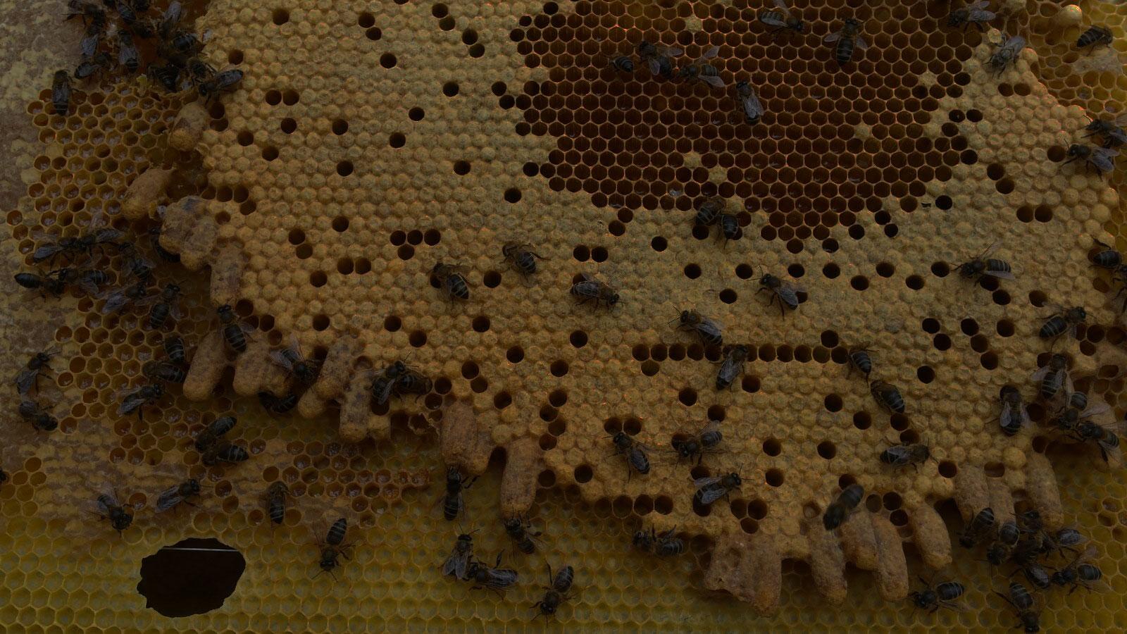 apicultores-jalea-real-formacion