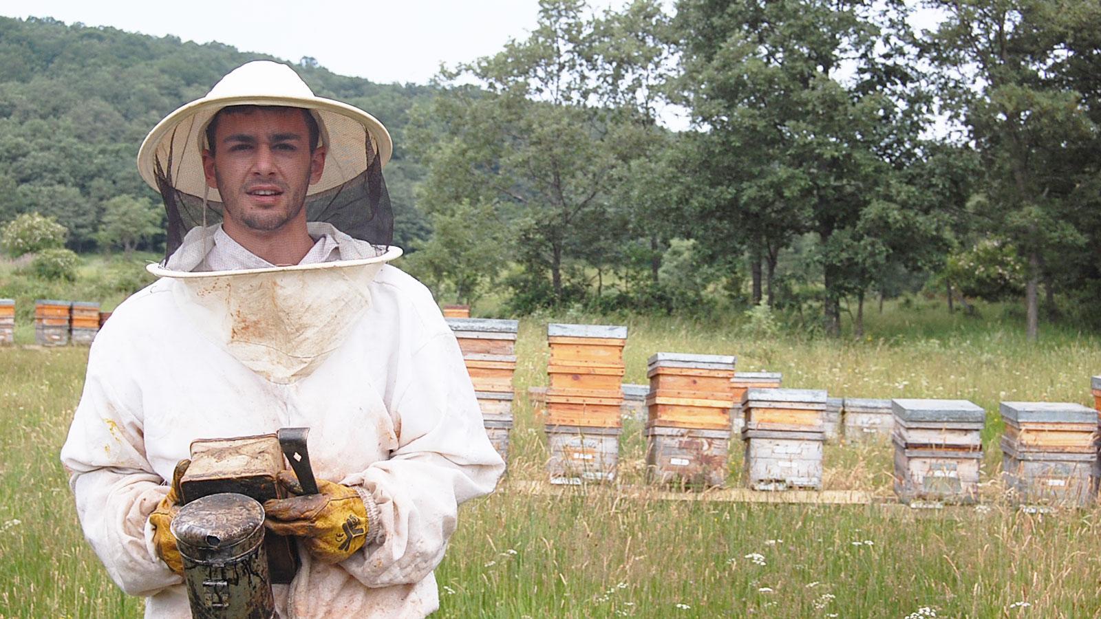 cursos-de-apicultura-profesional