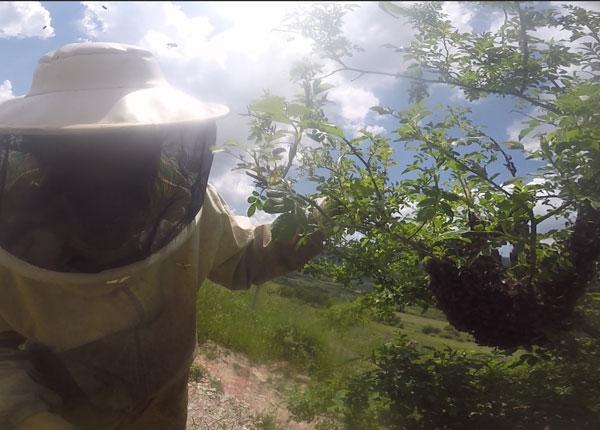 santuario-abejas