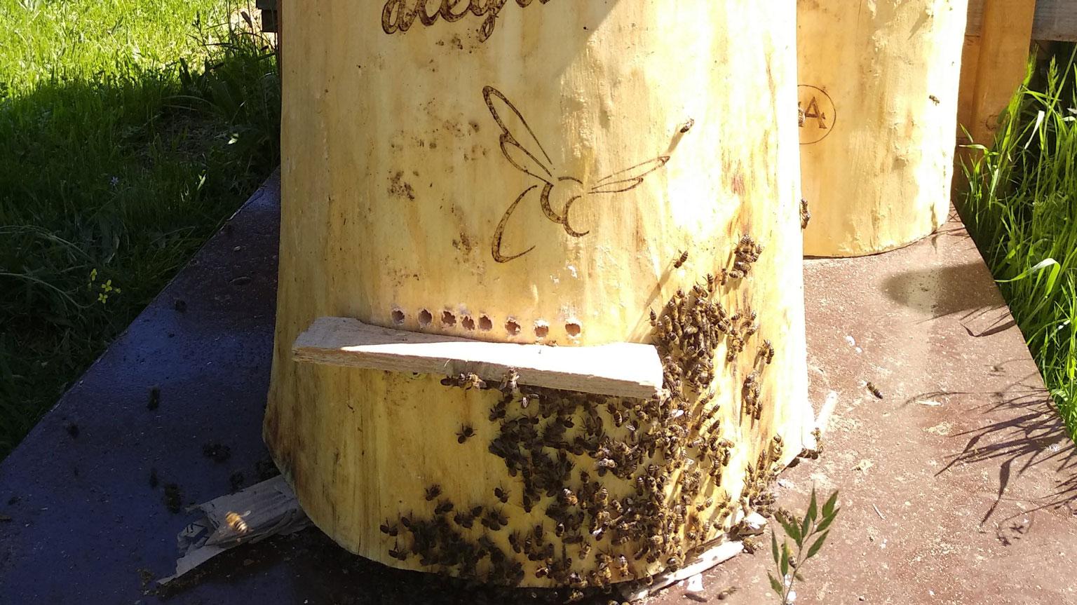 santuario-de-las-abejas