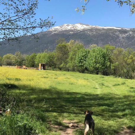 Entreabejas , visitas guiada, Rascafria , abejas, colmenas , apicultura